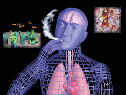 Animated Neuroscience and the Action of Nicotine, Cocaine, and Marijuana in the Brain
